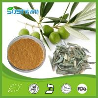 Wholesale Herb Medicine Olive Leave Extract Powder, 20% Oleuropein, Antioxidant, Improve Immune system from china suppliers