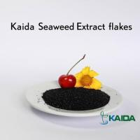 Wholesale Natural Super Quality Sea Kelp Source Dried Seaweed Extract Products from china suppliers