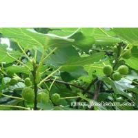 Buy cheap Olive Leaf Extract from wholesalers