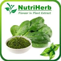 Natural Spinach Powder,Powdered Spinach,Organic Spinach Powder,Malunggay and Spinach Powder Manufactures