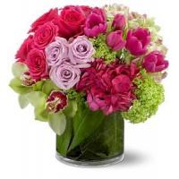 Wholesale Beautiful Cosmos Deluxe NO.62 delivery flower to china from china suppliers