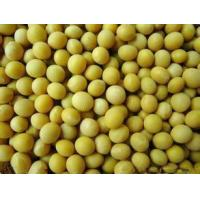 Buy cheap Soybean Extract from wholesalers