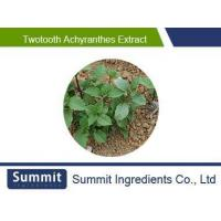 Wholesale Twotooth achyranthes extract 10:1,radix achyranthis bidentatae,Achyranthes bidentata,Twotooth Root from china suppliers