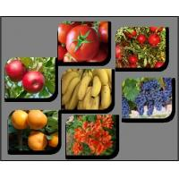 Buy cheap Agriculture Plant Growth Regulators - Global Market Outlook (2015-2022) from wholesalers