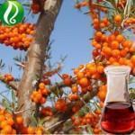 Buy cheap Ganoderma lucidum spores oil Herbal Extract from wholesalers