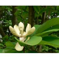 Buy cheap Botanical Extracts MagnoliaBarkExtract from wholesalers