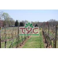 Buy cheap Wooden Poles Vineyards from wholesalers