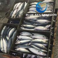 Buy cheap PACIFIC MACKEREL REF CODE QK 250-350G from wholesalers