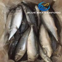 Buy cheap PACIFIC MACKEREL REF CODE QC 300-500G from wholesalers
