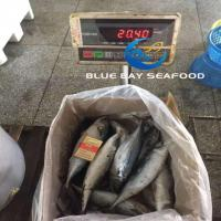 Buy cheap PACIFIC MACKEREL REF CODE QC 500G UP from wholesalers