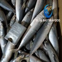 Buy cheap PACIFIC MACKEREL REF CODE QC 150-200G from wholesalers