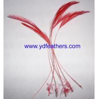 Buy cheap Loose feather / fancy feather from wholesalers