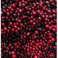 IQF Berries Frozen Lingonberry