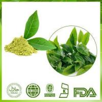 Buy cheap Green Tea Leaf Extract from wholesalers