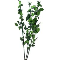 Buy cheap Other preserved flowers Preserved rose stem from wholesalers