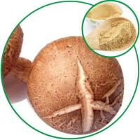 Wholesale Shiitake Powder, with the Effective Ingredient Mushroom Polysaccharide from china suppliers