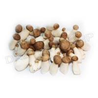 Buy cheap MINI KING OYSTER MUSHROOM from wholesalers