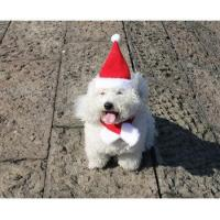 Buy cheap Christmas cat hat cute pet clothes decoration for small animal dog harness coat from wholesalers