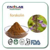 Buy cheap Coleus Forskohlii Briq Or Root Extract,PLECTRANTHUS BARBATUS Extract Forskolin from wholesalers
