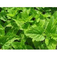 Buy cheap Aromatic waters Melissa officinalis water from wholesalers