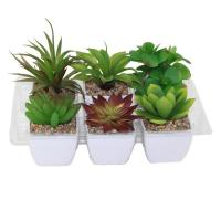 Buy cheap Artifical Plant from wholesalers
