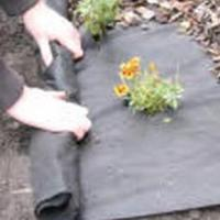 Buy cheap Landscaping Ground Cover product